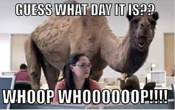 Hump Day Funny Quotes Wednesday