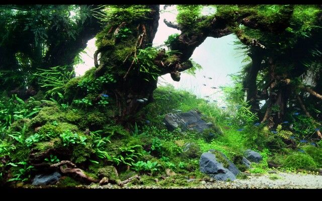 Freshwater Aquascape. Freshwater Aquarium Obsession Pinterest