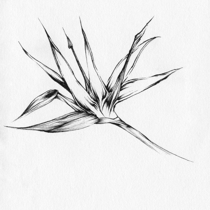 Bird of paradise plant tattoo