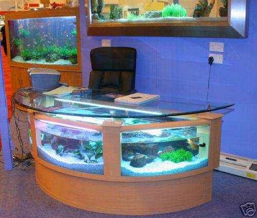 receptionist desk tall fish tank aquariums pinterest