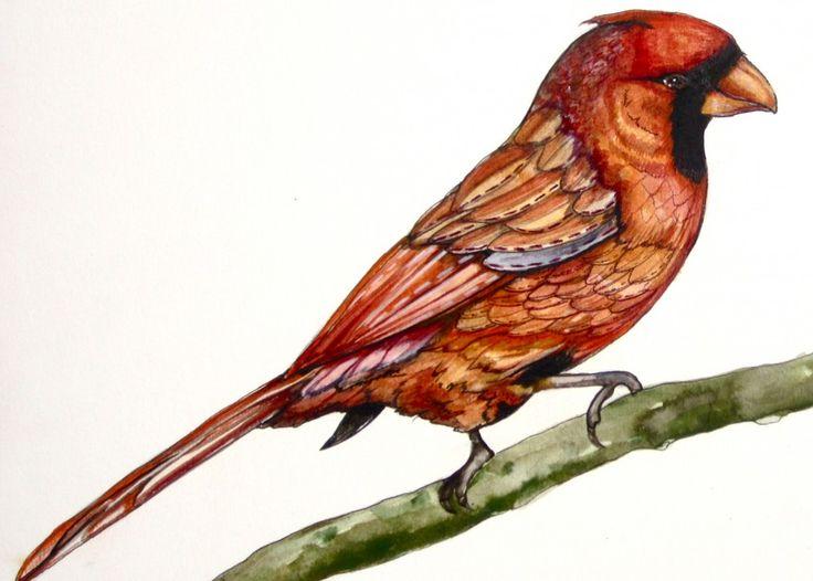 иллюстрации Клаудиа Трамбле | птицы | Клаудия Трамбле