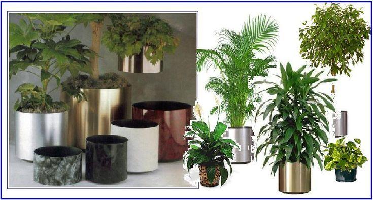Decoration Beautiful Indoor Plants Beautiful Indoor