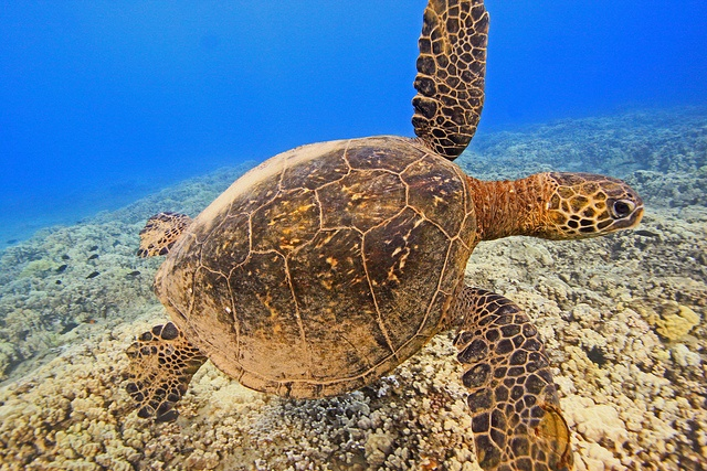 can you have sea turtles as pets? I want one.
