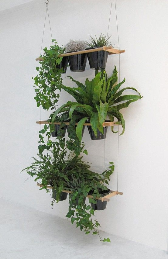 hanging indoor plants @ DIY Home Ideas. would work well in the upstairs front room