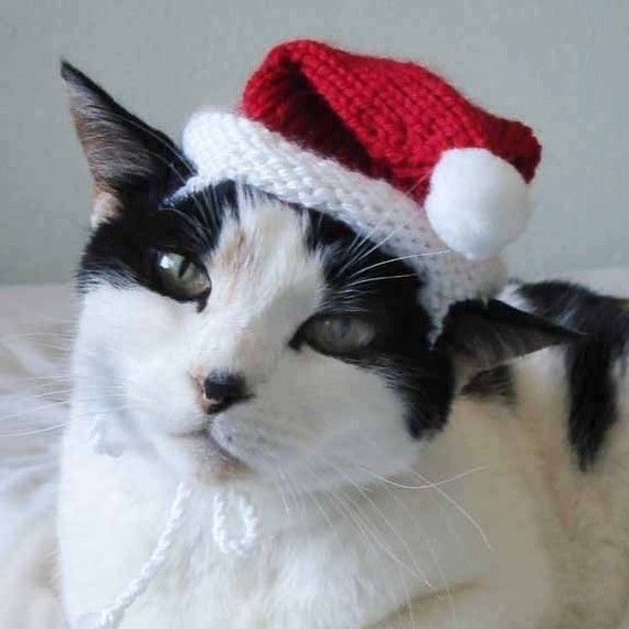 knitting pattern santa claus pet hat cat christmas by xmoonbloom