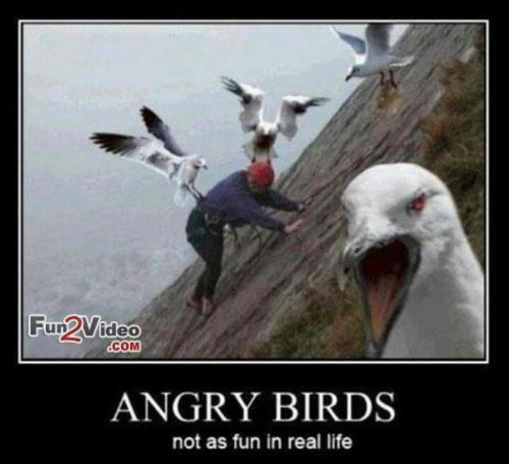 This Why Birds Are Evil Scary Shit