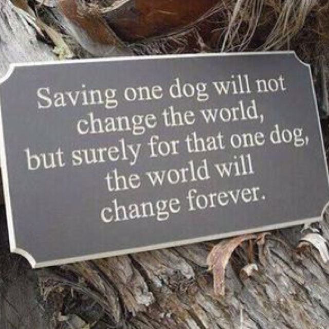 Rescue and adopt dogs from shelters!