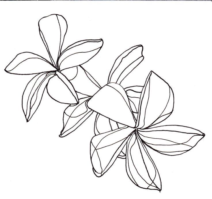 Plumeria Flower Line Drawing Line drawing - flowers -