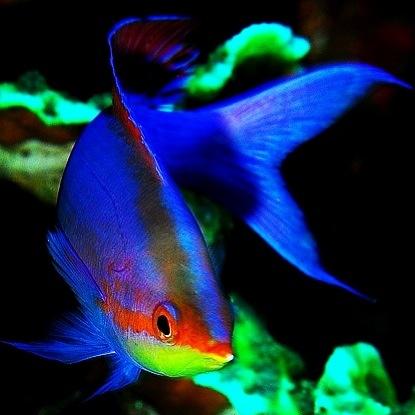 cool fish cool fish & aquariums i want Pinterest