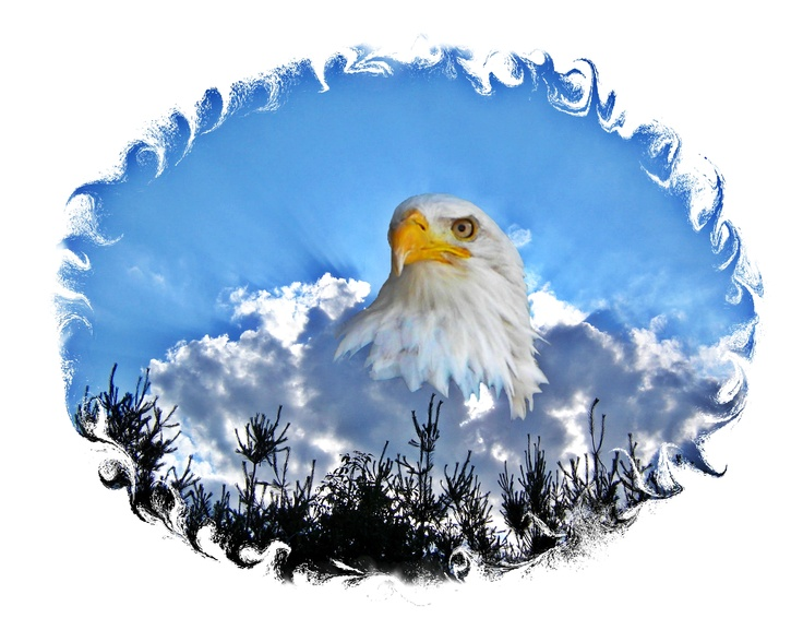 Eagle Head ~ Sky~cl