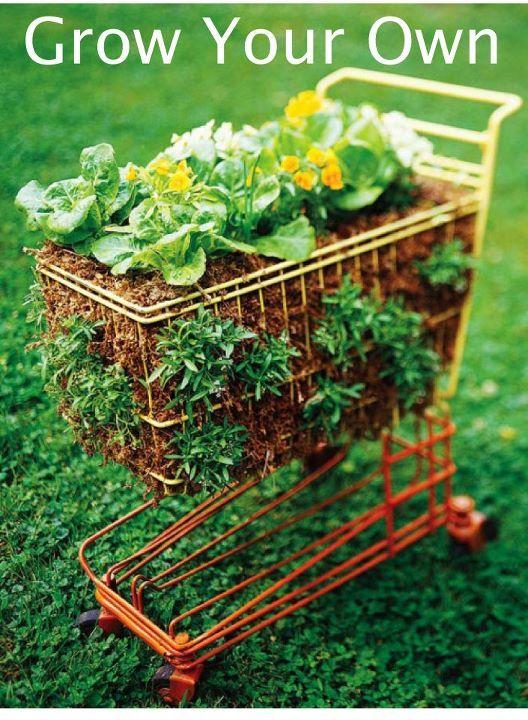 Grow your own diy vegetable gardens pinterest for Grow your own vegetable garden