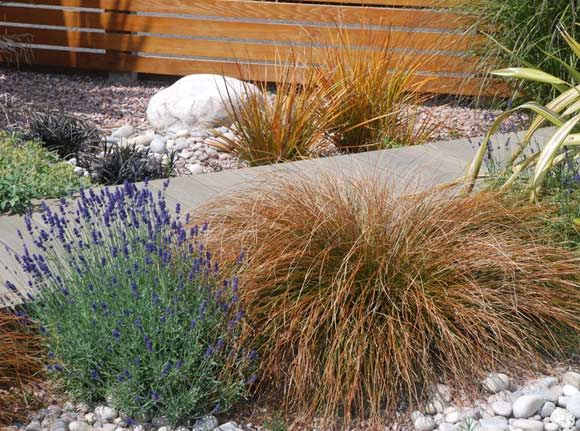 Sand Backyard Maintenance : lavender and grasses  Gardening Ideas  Pinterest