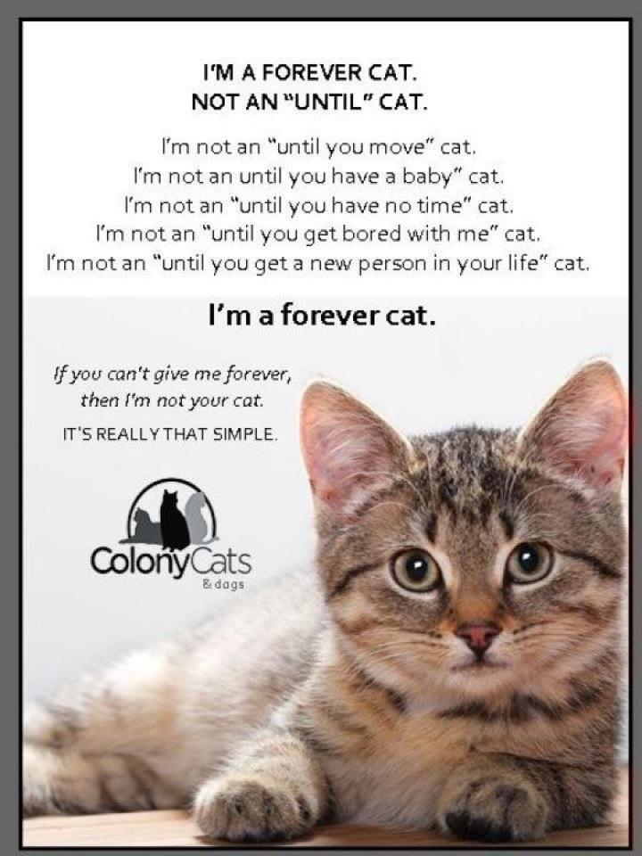 im a kitty kat