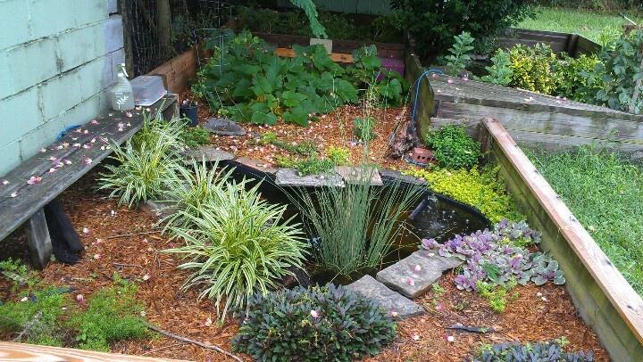 Box turtle , water turtle cage + garden turtle Pinterest