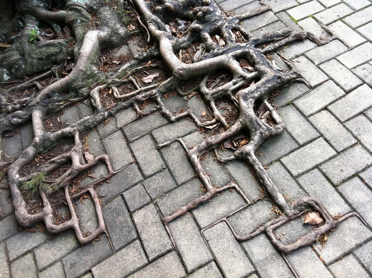 Roots fighting with bricks