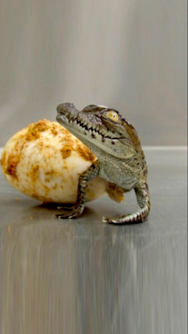 Coming out of its shell animals cute amp unusual pinterest
