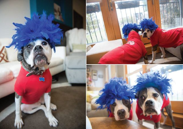 Dog Halloween Costumes Thing  And Thing