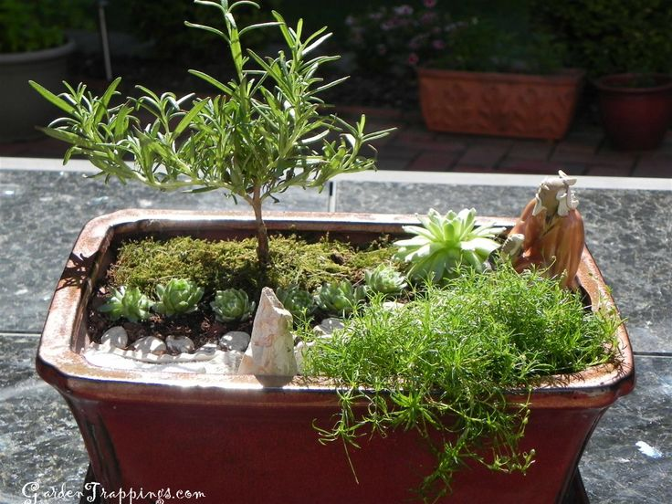 diy mini zen garden rosemary bonsai 30 fairy or miniature gardens. Black Bedroom Furniture Sets. Home Design Ideas