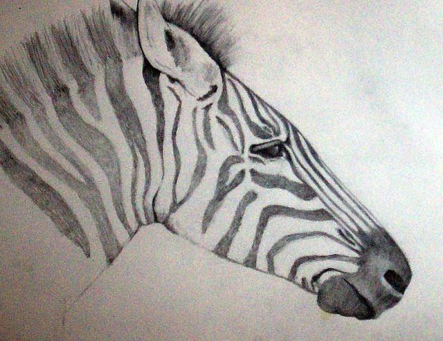 zebra pencil drawing - photo #14