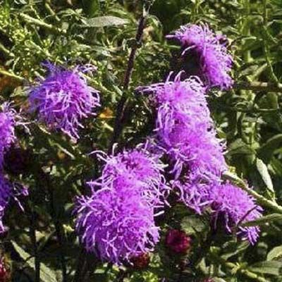 7 Fall Blooming Perennials