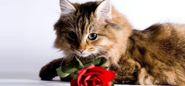 saint valentin photo montage