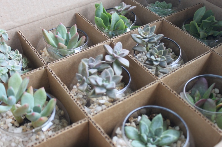 Succulent Terrarium Wedding Favors