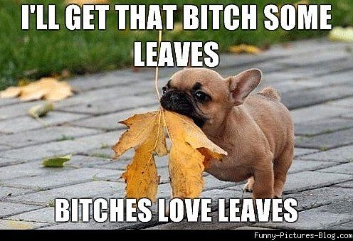 Bitches Love Leaves hahahaa