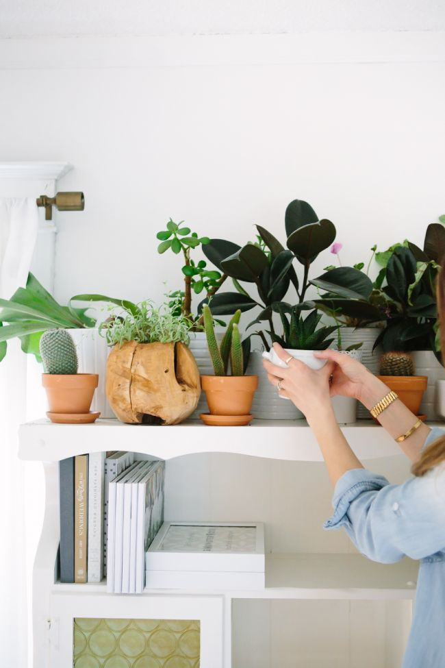 Shelf of Plants, étagère plantes, un coin de verdure chez soi, green home #pourchezmoi
