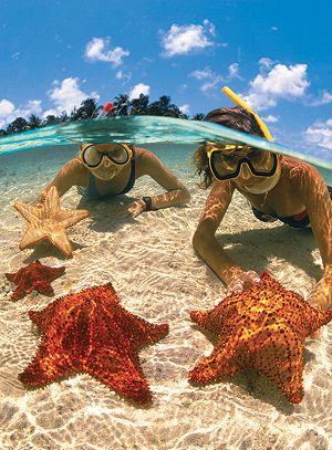 Starfish Beach - Grand Cayman as starfish are kept alive, view underwater! Good jod Children!