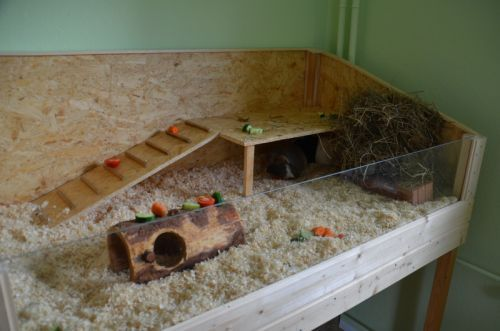 Diy guinea pig cage diy projects pinterest for Diy guinea pig hutch