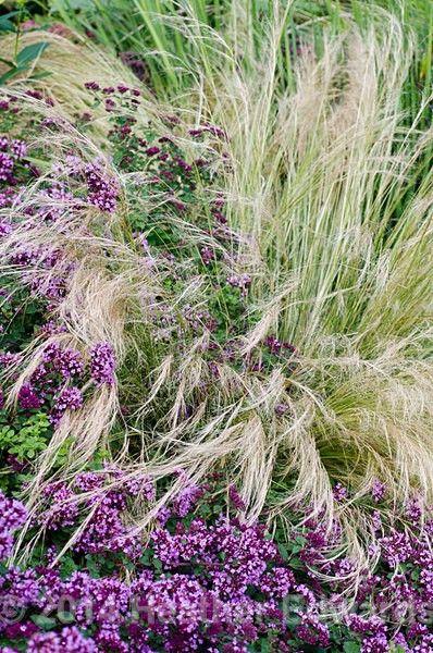 Wild grass for Wild ornamental grasses
