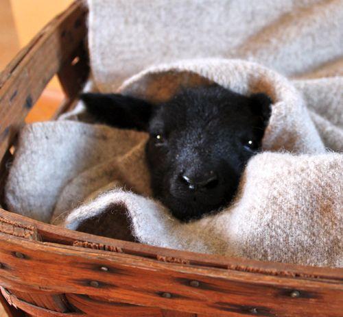 ¿Por qué la lana? http://www.dlana.es/blog/