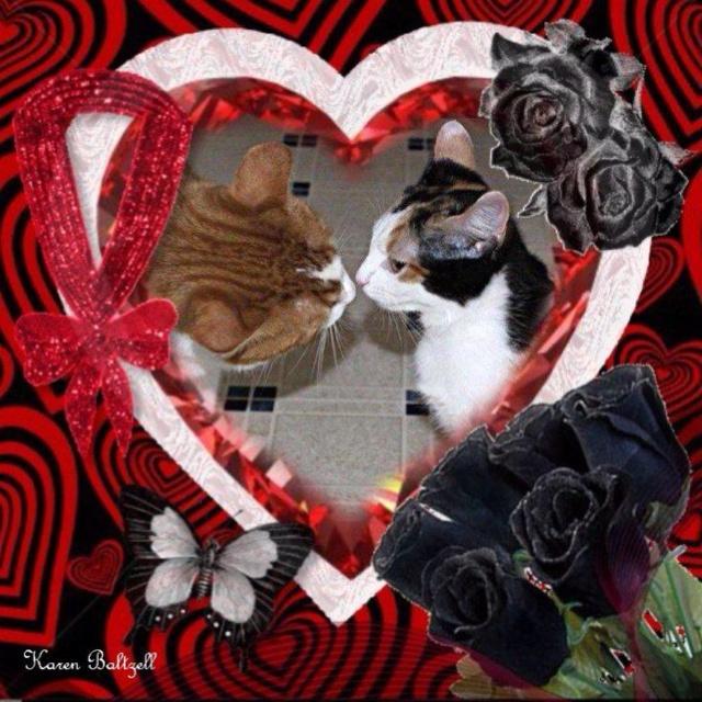 karen valentine photo gallery