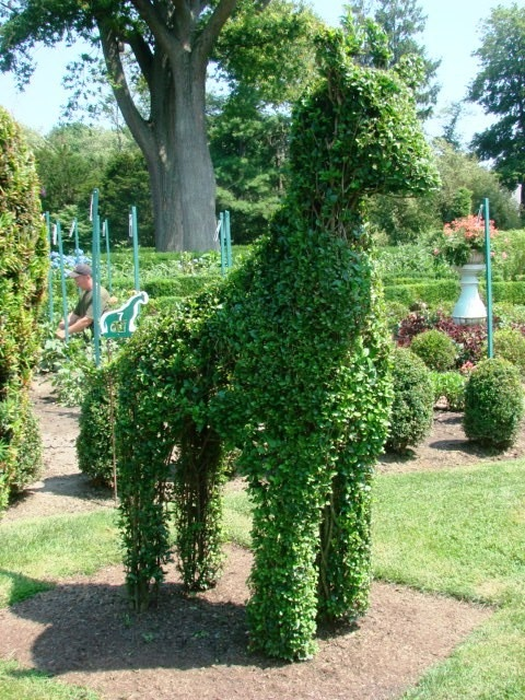 Pin By Rose Davies On Unusual Topiaries Pinterest