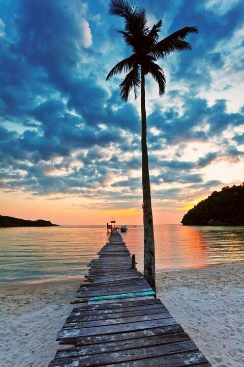 Beach√, Sunset√, Palm Tree√ | Oak Trees /Palm Trees ...