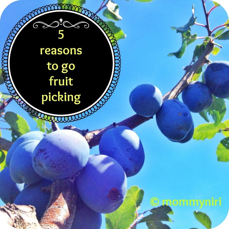 Fruit Picking and 5 reasons why you should go! | love this by @Nirasha Jaganath  #weteach