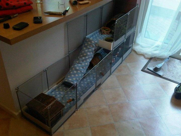 C c cage idea cavia porcellus guinea pigs pinterest for Diy c c guinea pig cage