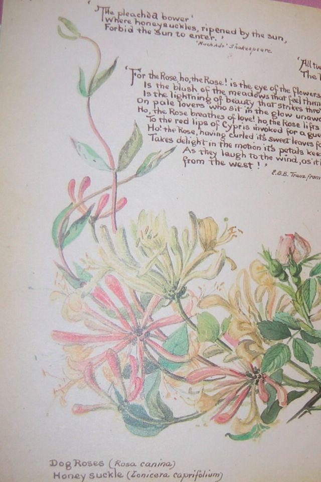 pin honeysuckle flower tattoo on pinterest. Black Bedroom Furniture Sets. Home Design Ideas