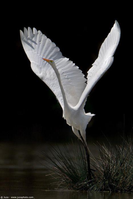 white crane bird wings flying beautiful   World & Nature ...