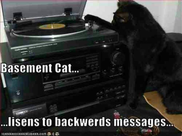 basement cat funny pinterest