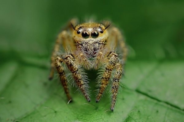 spider macro photo |