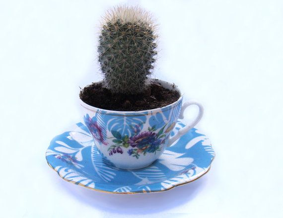 Vintage spring planter reuse up cycled tea cup turquoise tropical pri ...