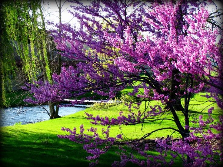spring is my favorite season essay