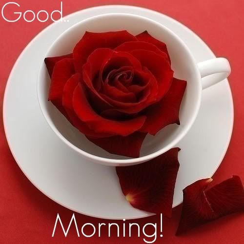 Good Morning with rose | Pictures | Pinterest
