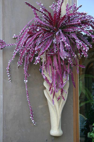 What 39 s that plant a trailing cactus called lepismium - Succulent container gardens debra lee baldwin ...