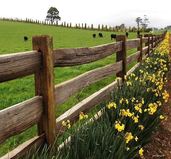 Farm life in spring for school pinterest for Ranch and rural living