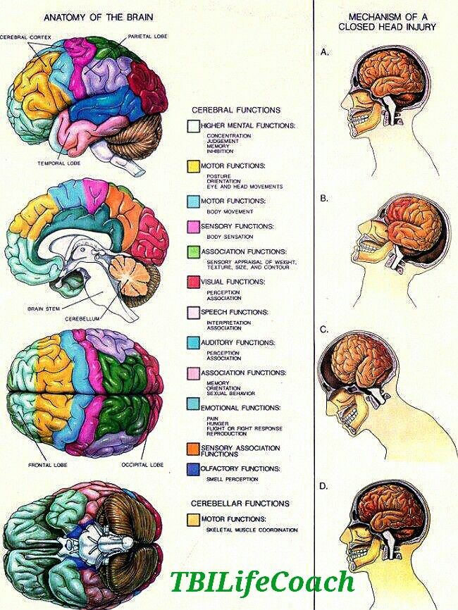 Chemicals increase brain activity photo 4