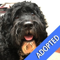 Yay! Bentley is now adopted! So many best wishes to this heart-melting 2yr-old Tibetan Terrier!