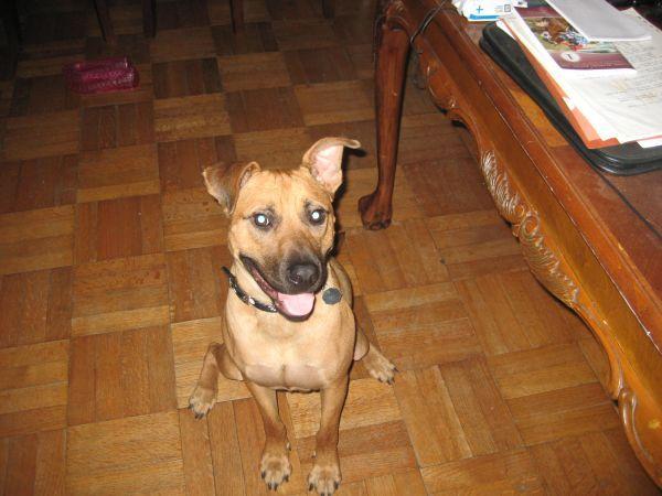 Craigslist Houston Pets Puppies - guideTRAVELing