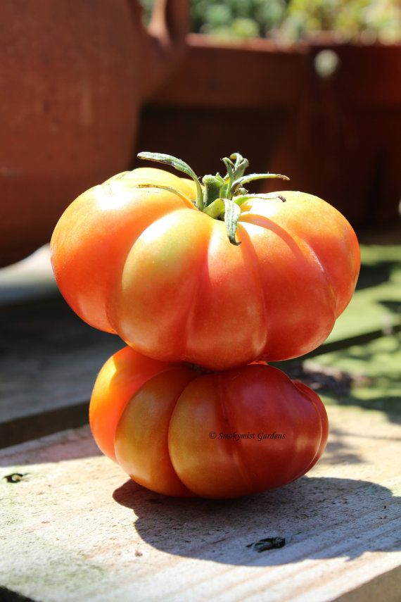 Heirloom Tomato Seeds Russo Sicilian Togeta by SmokymistGardens, $2.75